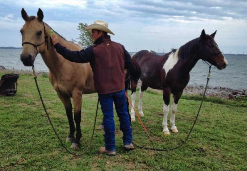 What do Compassionate Financial Life Planning and Natural Horsemanship Have in Common?